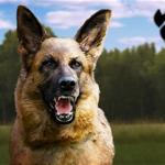sowjet wachhund Wachhund